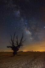 Árbol Bajo Las Estrellas