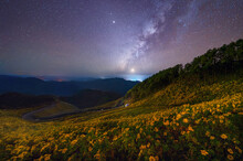Tree Marigold Or Yellow Flowers With Stars On Milky Way In National Garden Park And Mountain Hills At Night In Mae Hong Son, Thailand. Nature Landscape In Travel Trip. Thung Bua Tong At Doi Mae U Kho.