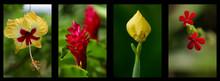 Fleurs Des Seychelles