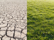 Cracked, Dry And Parched Desert Terrain After Drought And Fresh Green Grass. Global Warming, Climate Change And Desertification Concept.