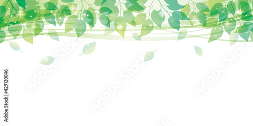 Fototapeta 爽やかな新緑フレーム obraz