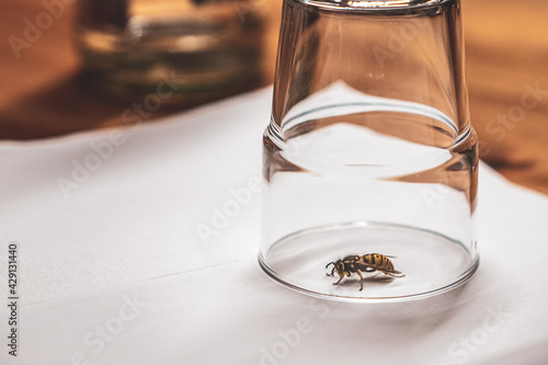 Foto Selective focus shot of a bee kept under glass on a white surface