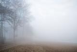 las we mgle o świcie