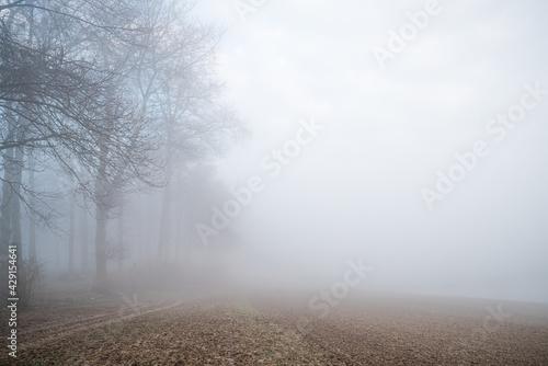 las we mgle o świcie - fototapety na wymiar