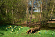 Sibylla Temple In The Royal Bath Park (Łazienki Królewsie). Daffodils And A Log In The Foreground