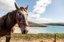 Horse Looking Straight At The Camera In The Beautiful Scenario Of Barley Cove, Mizen Peninsula, County Cork, Ireland