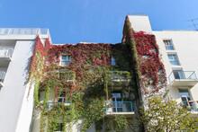 Mur Végétal D'un Immeuble à Paris