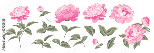 Set of differents peonies on white background. - fototapety na wymiar