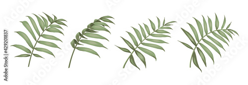 Set of differents palm leaves on white background. - fototapety na wymiar