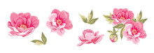 Set Of Differents Peonies On White Background.