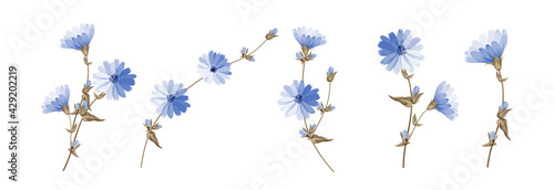 Set of differents succoryon flowers on white background. Fototapete