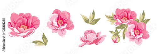 Fotografie, Obraz Set of differents peonies on white background.