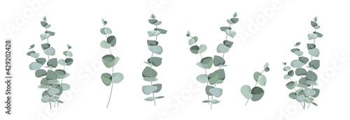 Set of differents eucalyptus leaves on white background. - fototapety na wymiar