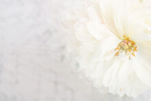 Soft White Peonies With Fractal Filter