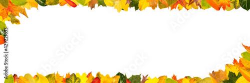 Obraz Buntes Herbst Laub als Rahmen für Header Banner - fototapety do salonu