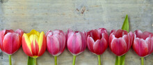 Banner Arranged Row Of Bouquet Tulips On A Empty Copy Space Wooden Background