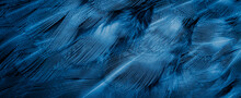 Blue Pheasant Feathers With Dark Stripes. Background