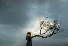Owl Nesting Box On Top Of A Dead Tree