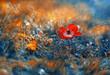Kwiat Zawilec (Anemone) abstrakcja