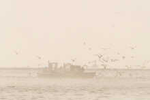 Boats Of The Coastal Professional Fisherman Checking Their Fish Traps On The Sea Bay, While Big Swarm Of Seagulls Surrounding The Boats For Feasting With By-catch Fish