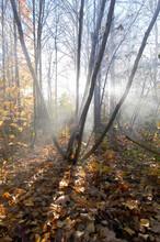 Smoke In Th Fall Trees