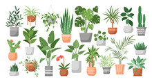 Houseplants. Vector Set Of House Decor With Plants, Succulents In Pot. Indoor Exotic Flowers With Stems And Leaves. Monstera, Ficus, Pothos, Yucca, Dracaena, Cacti, Snake Plant For Home And Interior