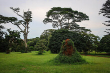 Landscape Of Entebbe Botanical Gardens View By Summer, Uganda
