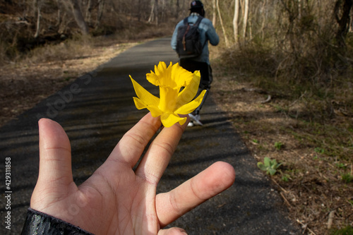 Obraz na plátně Closeup shot of a hand holding a yellow narcissus flower with another person in