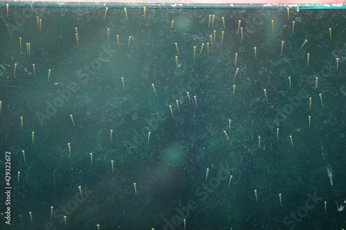 Fotografie, Tablou ガラスに張り付く誕生したばかりの金魚の赤ちゃん