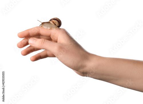 Fototapeta Hand with snail on white background