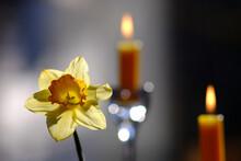 Zwei Kerzen Und Eine Narzissenblüte Als Zeichen Des Gedenken