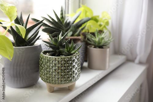 Obraz Beautiful potted houseplants on window sill indoors - fototapety do salonu