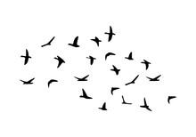 Flock Of Flying Birds Isolated On White Background
