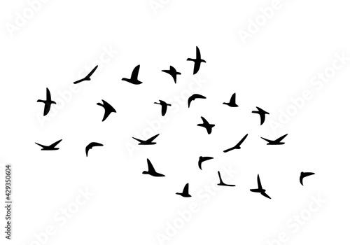 Flock of flying birds isolated on white background - fototapety na wymiar