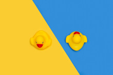 Dos Patos De Goma Sobre Un Fondo Amarillo Y Azul Liso Y Aislado. Vista Superior. Copy Space