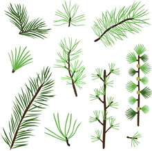 Set Of Collection Of Green Natural Forest Pine, Christmas Tree, Needles Branches Of Greenery, Pine Needles. Decorative Winter Seasonal Editable, Isolated Art Set. Vector Graphics