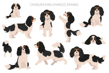 Cavalier King Charles Spaniel Clipart. Different Poses, Coat Colors Set