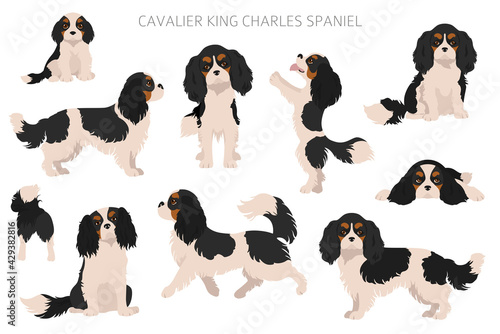 Valokuvatapetti Cavalier King Charles spaniel clipart