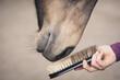 Leinwandbild Motiv Pferdepflege