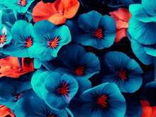 Beautiful Flowers Of An Unusual Neon Shade Of Blue And Orange, Design Background. Street Flowers. Copy Space.