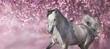 White arabian horse against pink blossom tree