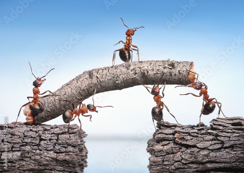 Canvas Print team of ants works constructing bridge, teamwork concept