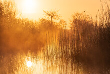 FTranquil, Foggy Sunrise In A Wetland In The Netherlands.