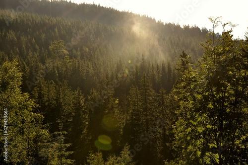 Lasy górskie. - fototapety na wymiar