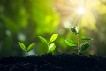 Economic Growth, Tree Plant Growing In Sunlight Three Steps, Financial Growth Or Of Saving Money And Increasing Finances Concept