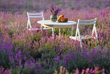 White Wooden Table And Two Chairs, Decorated With Fresh Delicious Croissants And Glass Vase With Lavender Bouquet. Beautiful Decoration For Date In Lavender Field Full Of Blooming Purple Flowers.