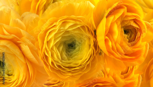 Foto Yellow bright color anemone flower bouquet background