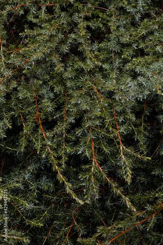 zielone rośliny w ciepły wiosenny dzień, zieleń w parku z bliska   - fototapety na wymiar