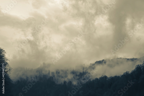 Fotografie, Obraz Foggy haze and dramatic sky at the mountainside with perennial trees