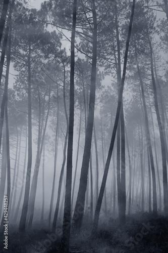 Blue forest - fototapety na wymiar